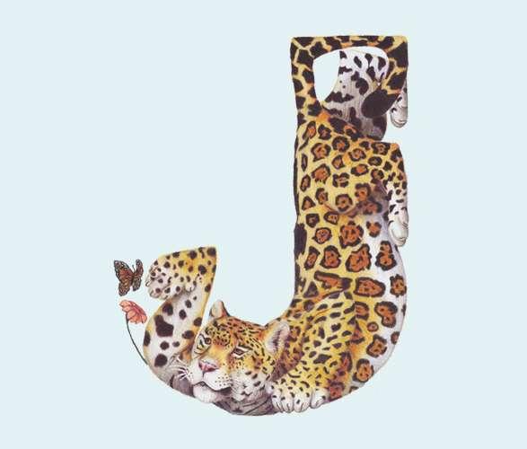 Animalistic Alphabet Typography