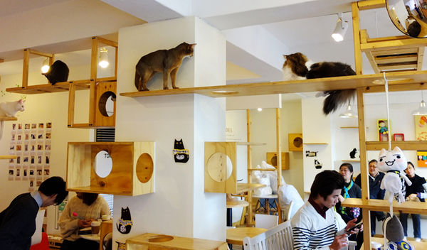 Feline-Focused Coffee Shops