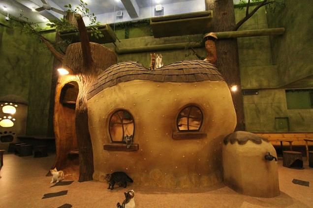 Fairytale Cat Cafes