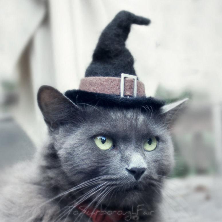 Feline Halloween Hats