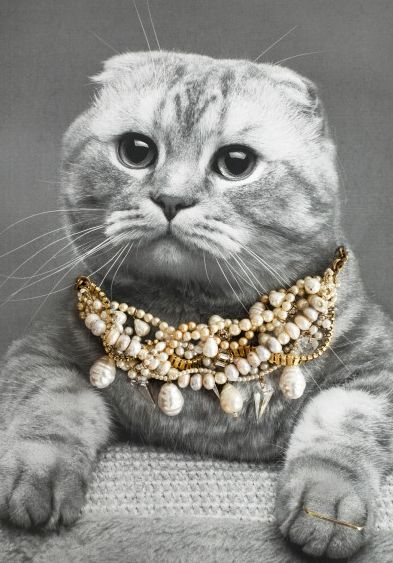 Personified Cat Editorials