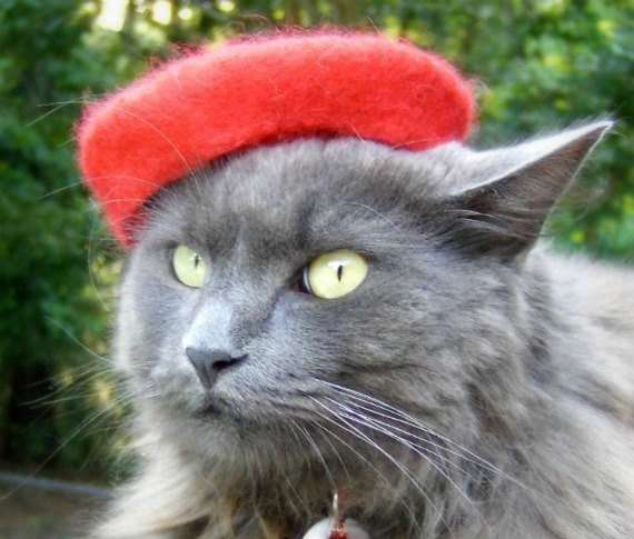 Feline Fedoras