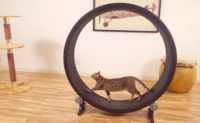 Cat Hamster Wheels