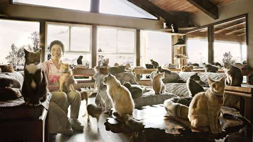 Immense Feline Shelters