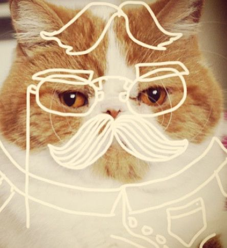 Cat-Doodling Instagram Accounts