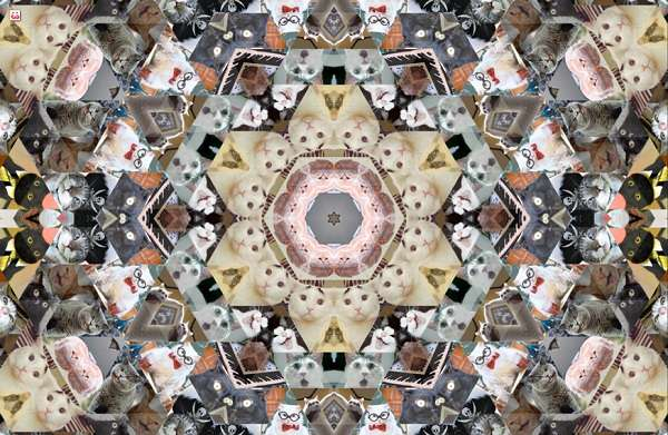 Cat Meme Kaleidoscopes