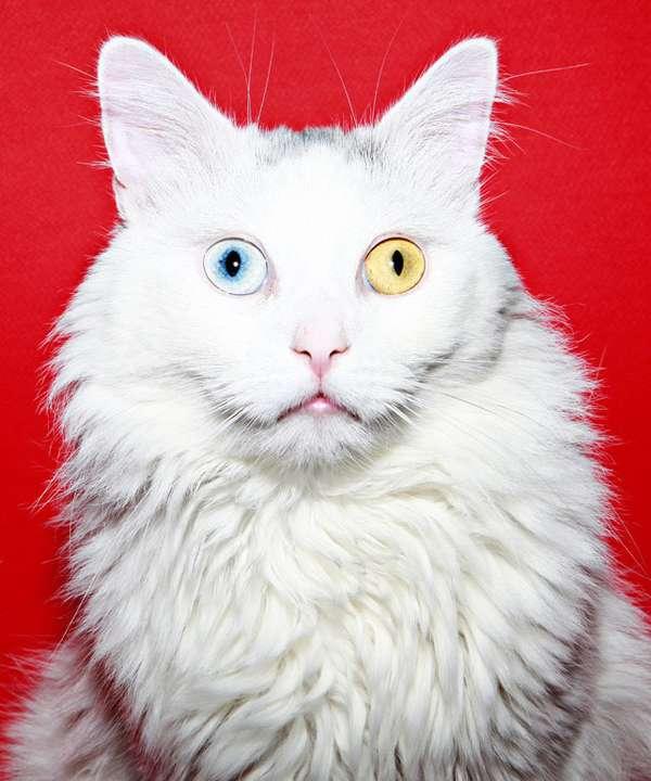 Neon Feline Captures