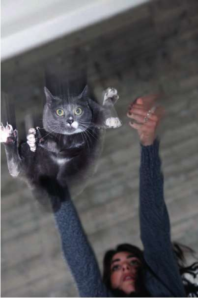 Cat-Throwing