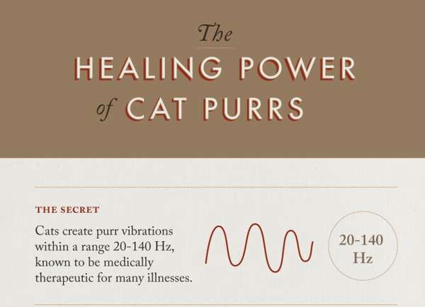 Medical Cat Purr Facts