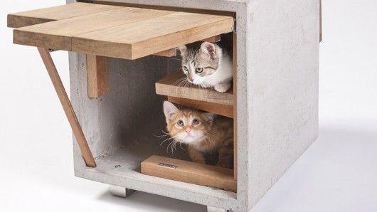 Feline-Friendly Architecture
