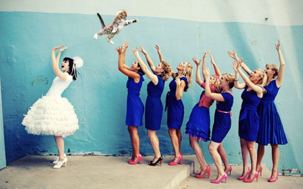 Cat-Throwing Bridal Memes