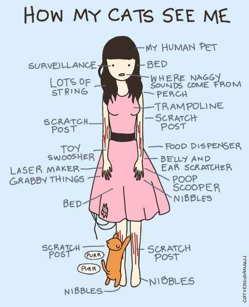 Illustrated Feline Funnies