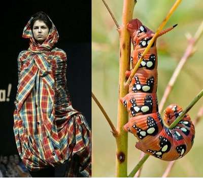 Caterpillar-Inspired Couture