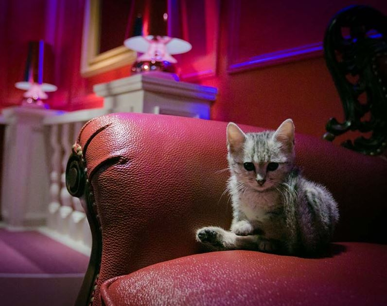 Luxe Cat Cafe Concepts