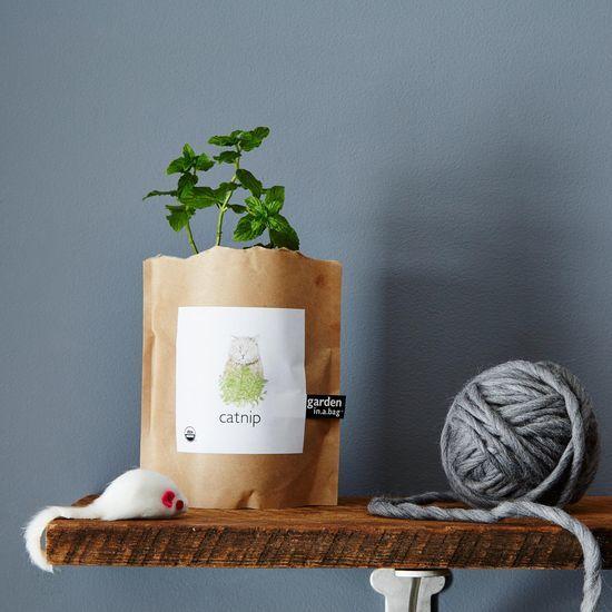 At-Home Catnip Garden Kits