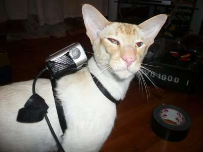 DIY Pet Cameras