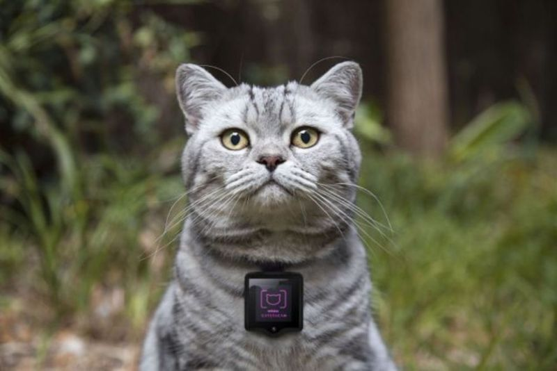 Feline Photographer Collars