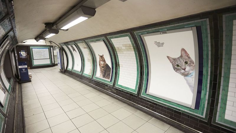 Cat-Themed Advertising Replacements