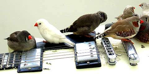 Feathery Guitar Feeders