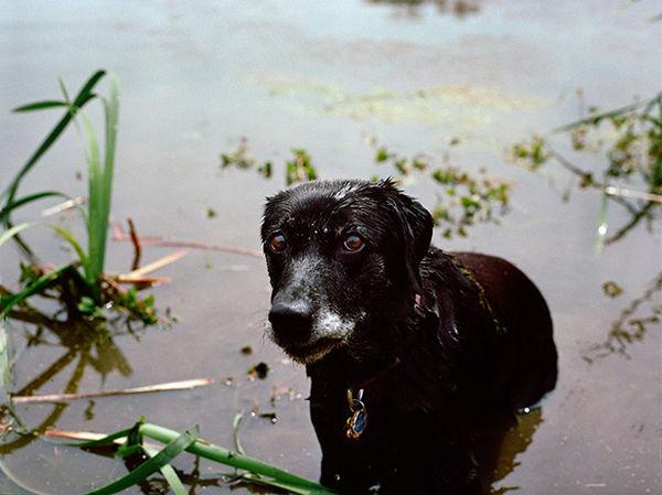 Poignant Rescue Dog Photos