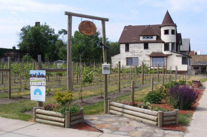Altruistic Urban Vineyard