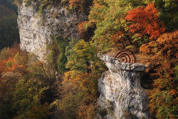 Pine Cone-Patterned Landscapes