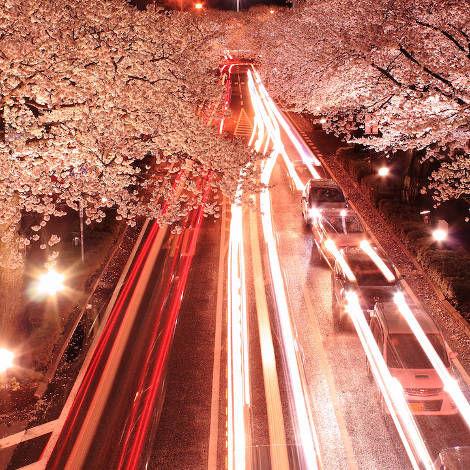 Romantic Pinkish Roadscapes