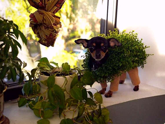 Chia Pet Animal Costume