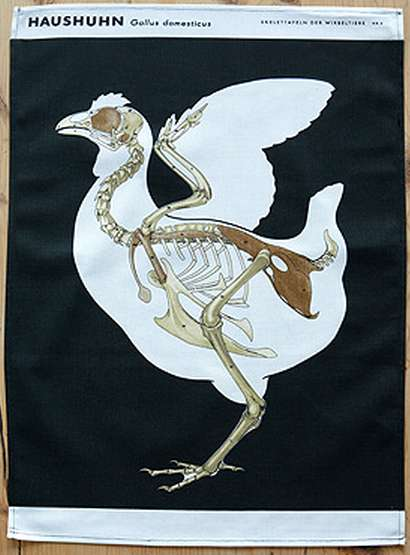 Avian Anatomy Tea Towels