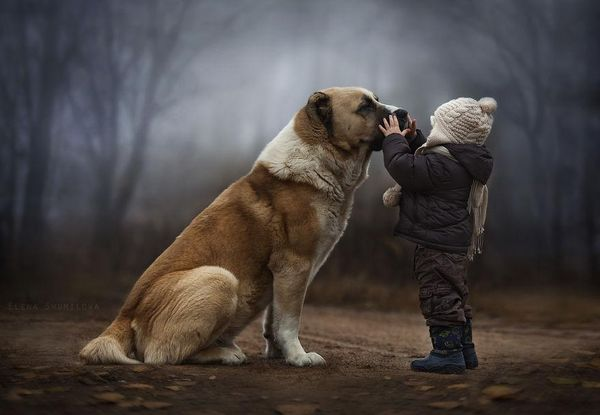 Enchanting Child Pet Photography