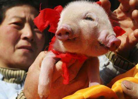http://cdn.trendhunterstatic.com/thumbs/chinas-lucky-two-faced-pig.jpeg