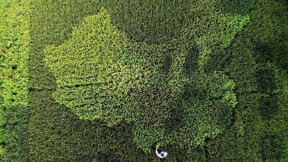 Massive Crop Maps