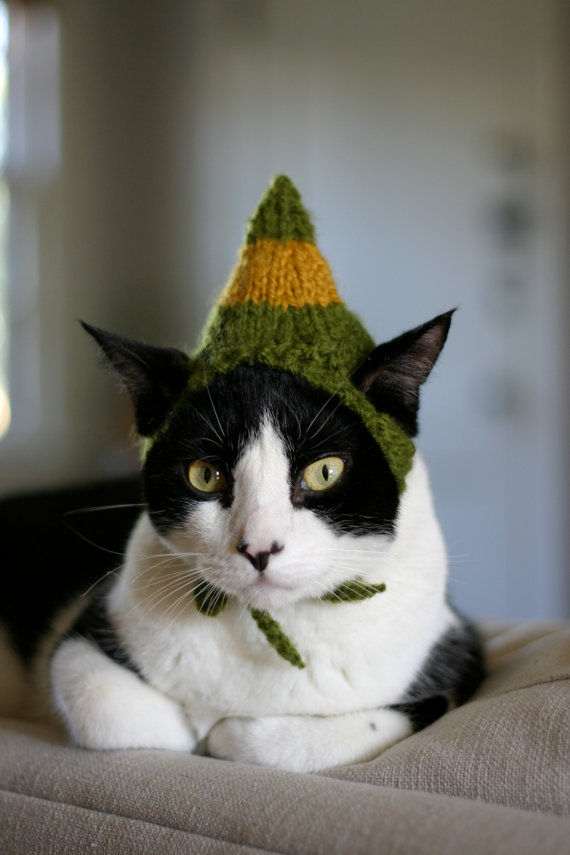 Festive Feline Fashions