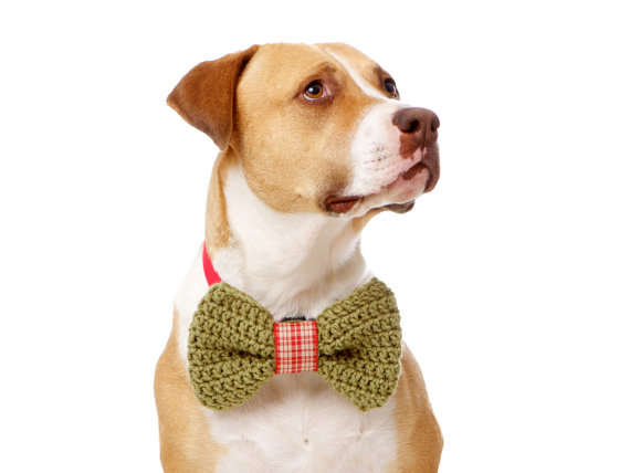 Holiday Pooch Neckties