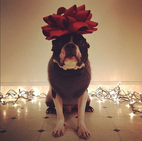 Festively Adorned Pooch Portraits