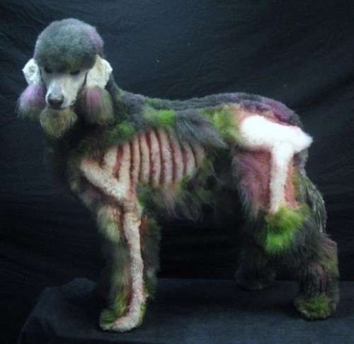 Cindy the Zombie Poodle