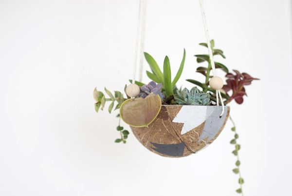 Upcycled Coconut Planters