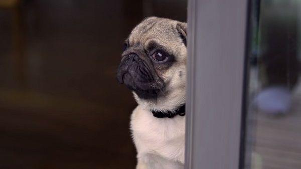 Waiting Dog Ads