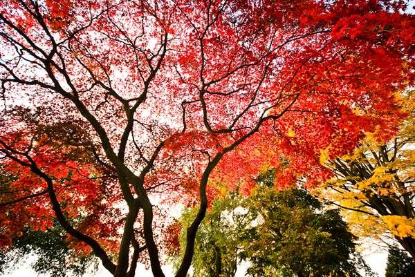 Surreal Foliage Photography