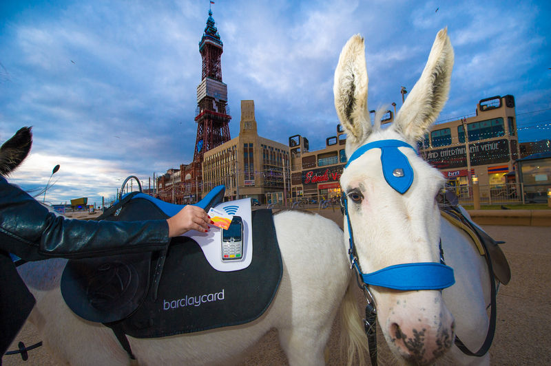 Contactless Payment Saddles