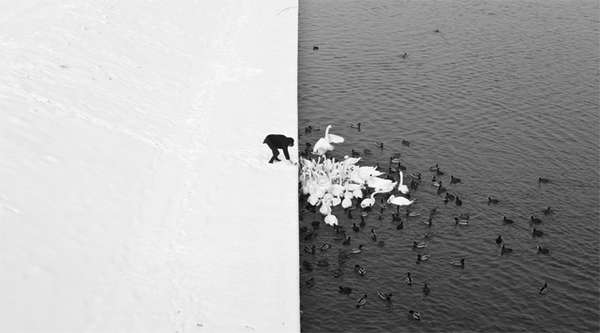 Cleverly Contrasted Nature Shots