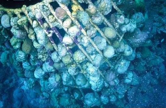 Natural Reef Rebuilders