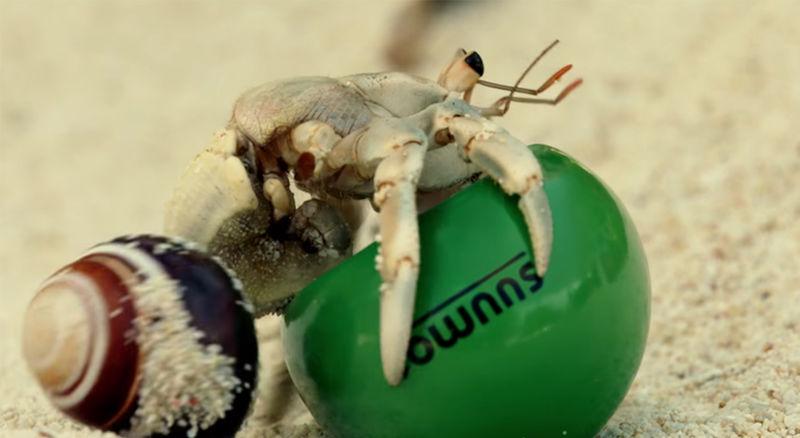 Potato Starch Crab Shells