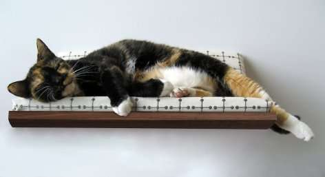 Wall-Mounted Pet Beds