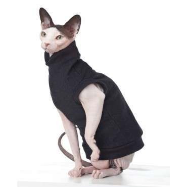 hairless cat in a sweater