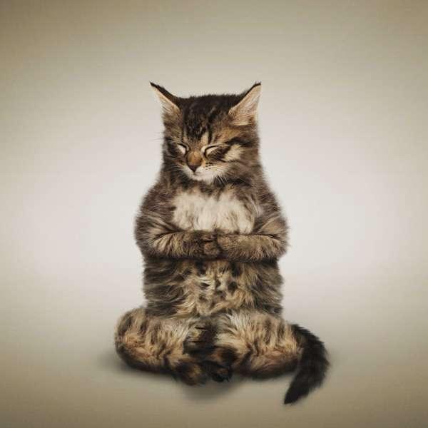 inner peace cat