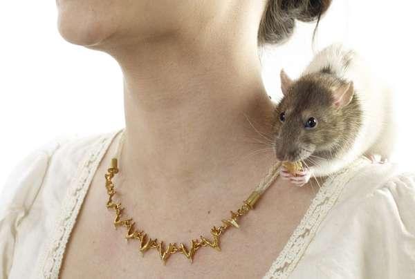 Rodent Bone Jewelry