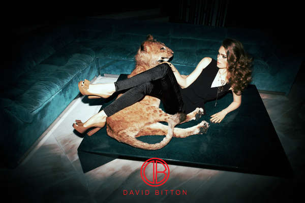 Lion-Taming Fashion Ads