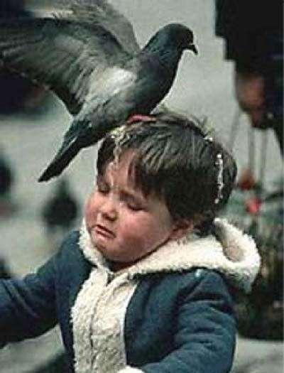 Death By Pigeon Poop