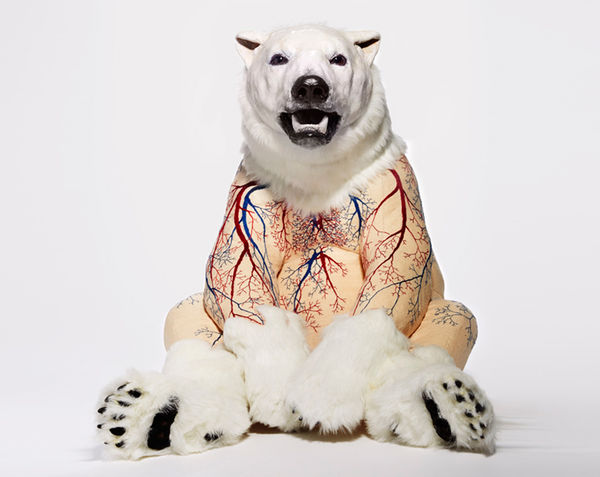 Inside-Out Taxidermy